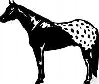 Appaloosa Horse Equestrian Trailer TruckSign Decal 7